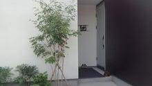 ロータスエランと猫とシンプルな暮らしやすい家