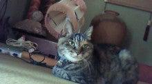 $沙魚のお気楽日記-隣の猫
