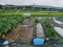 耕作放棄地を剣先スコップで畑に開拓!有機肥料を使い農薬無しで野菜を栽培する週2日の農作業記録 byウッチー-130902ウッチー式・今日の農作業の出来栄え02
