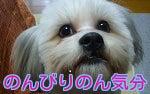 $スノボ犬パンジーとあこぷー呑みアル記-くうたバナー