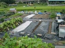耕作放棄地を剣先スコップで畑に開拓!有機肥料を使い農薬無しで野菜を栽培する週2日の農作業記録 byウッチー-130903ウッチー式・今日の農作業の出来栄え03