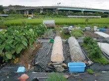 耕作放棄地を剣先スコップで畑に開拓!有機肥料を使い農薬無しで野菜を栽培する週2日の農作業記録 byウッチー-130903ウッチー式・今日の農作業の出来栄え02