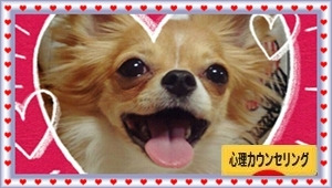 庄司真弓@心理セラピー☆カウンセリング★仙台Berry's Color~最上級の笑顔をあなたに~ -日本ブログ村 心理カウンセリング