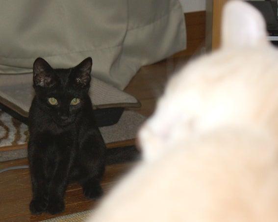 レオ&チャコ Cat'sの ~ I t's OK ! ~