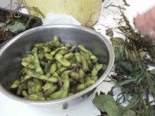 コミュニティ・ベーカリー                          風のすみかな日々-枝豆2