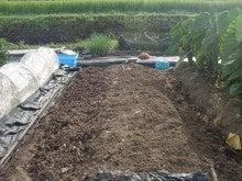 耕作放棄地を剣先スコップで畑に開拓!有機肥料を使い農薬無しで野菜を栽培する週2日の農作業記録 byウッチー-130903ブロッコリー定植前の元肥畝間施肥畝立08