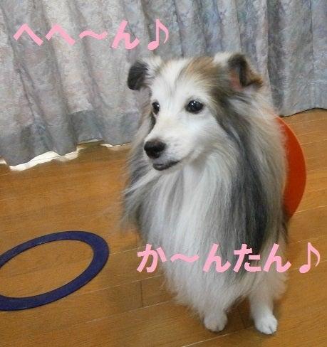 るんるん★シェリー&ミルフィー