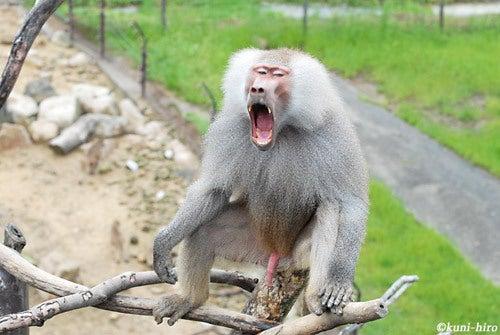 $我ら浪速の動物園児ィ~!! -動物写真ブログ--おたけび