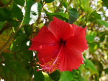 幸せ溢れる素敵な沖縄のひととき