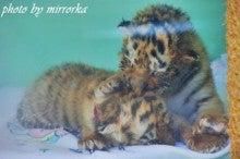 中国大連生活・観光旅行ニュース**-大連 森林動物園 赤ちゃん動物村