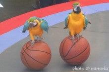 中国大連生活・観光旅行ニュース**-大連 鳥語園