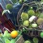 秋の実物がいっぱいで…