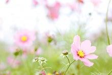 $心の悩みを解決して、潜在意識で願望実現する幸せ作り養成講座☆東北山形県山形市NLP心理カウンセリング-kosumosu