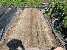 耕作放棄地を剣先スコップで畑に開拓!有機肥料を使い農薬無しで野菜を栽培する週2日の農作業記録 byウッチー-130909極早生たまねぎマッハ種蒔き04
