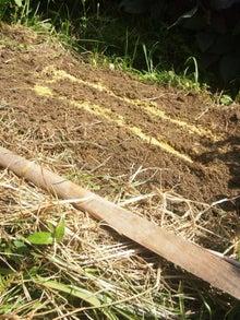 炭素循環農法と自然農法組み合わせてやりたいな~~-DSC_0543.JPG