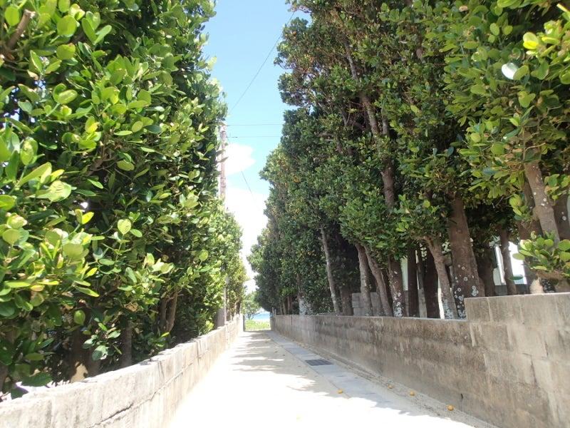 歩き人ふみの徒歩世界旅行 日本・台湾編-ふくぎ並木と海