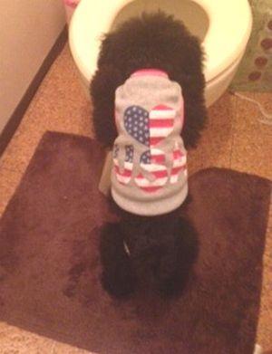 $セレブなワンコのかわいい犬服・ハーネスのお店 Go Go Dogs
