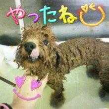 Poodock♪ownerのママトリ日記2-2013-09-13_23.56.42.jpg