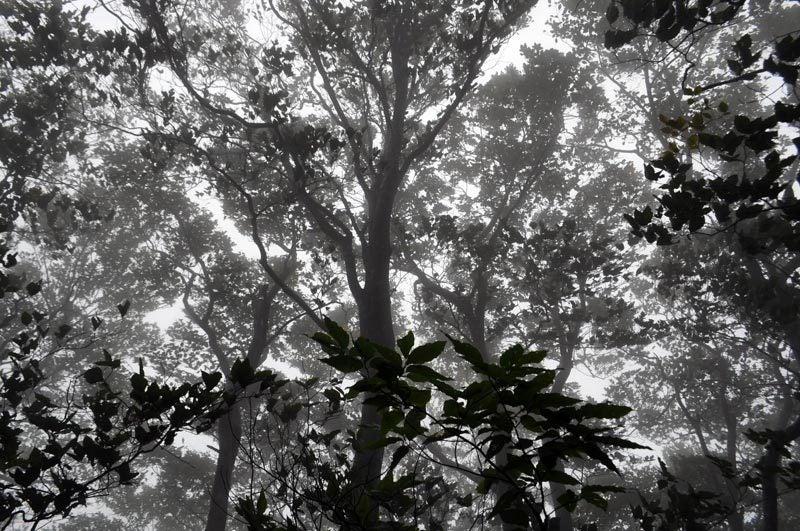 $白神山地ツアーの白神なびスタッフブログ-2013年9月中旬の白神山地の二ツ森5
