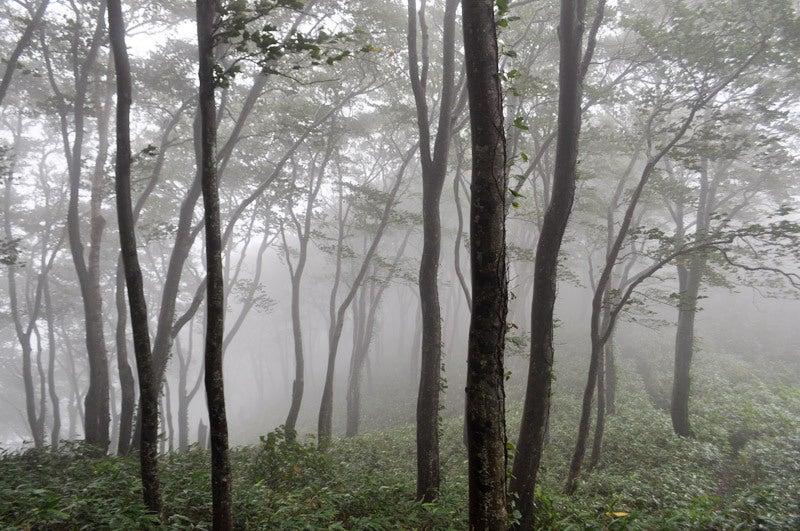 $白神山地ツアーの白神なびスタッフブログ-2013年9月中旬の白神山地の二ツ森9
