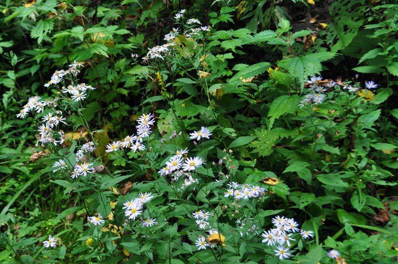$白神山地ツアーの白神なびスタッフブログ-2013年9月中旬の白神山地の二ツ森2