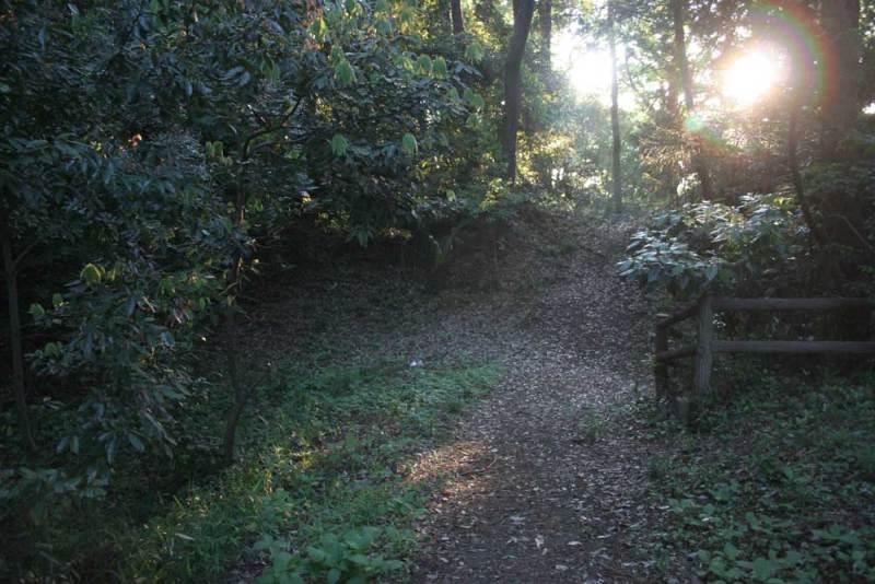 柏原城/空堀と土塁