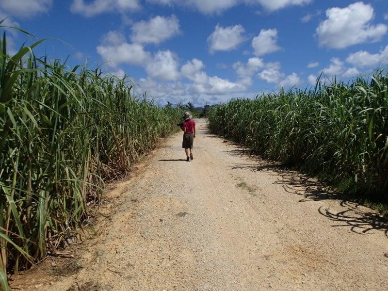 歩き人ふみの徒歩世界旅行 日本・台湾編-ウージ2