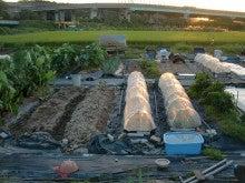 耕作放棄地を剣先スコップで畑に開拓!有機肥料を使い農薬無しで野菜を栽培する週2日の農作業記録 byウッチー-130917ウッチー式・今日の農作業の出来栄え02