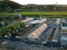 耕作放棄地を剣先スコップで畑に開拓!有機肥料を使い農薬無しで野菜を栽培する週2日の農作業記録 byウッチー-130917ウッチー式・今日の農作業の出来栄え03