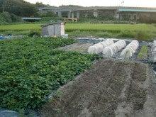 耕作放棄地を剣先スコップで畑に開拓!有機肥料を使い農薬無しで野菜を栽培する週2日の農作業記録 byウッチー-130917ウッチー式・今日の農作業の出来栄え05