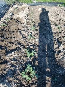 耕作放棄地を剣先スコップで畑に開拓!有機肥料を使い農薬無しで野菜を栽培する週2日の農作業記録 byウッチー-130917ジャガイモデジマ0827定植第1回目土寄06