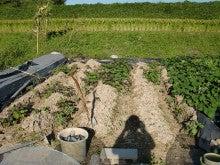 耕作放棄地を剣先スコップで畑に開拓!有機肥料を使い農薬無しで野菜を栽培する週2日の農作業記録 byウッチー-130917ジャガイモデジマ0827定植第1回目土寄01
