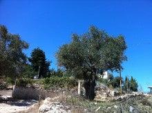 ブログ版PB通信-olivetree