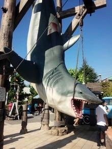 健康&リラクゼーション-サメ
