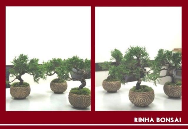 bonsai life      -盆栽のある暮らし- 東京の盆栽教室 琳葉(りんは)盆栽 RINHA BONSAI-琳葉盆栽 真柏
