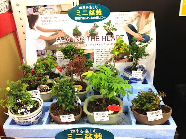 盆栽丼 BONSAI★DON 特盛り入りました~♪-ミニ盆栽