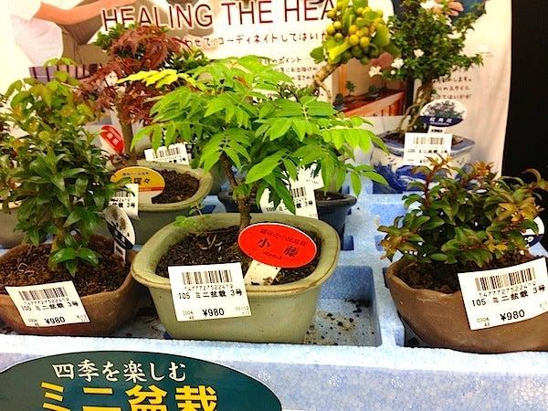 盆栽丼 BONSAI★DON 特盛り入りました~♪-ミニ盆栽小藤