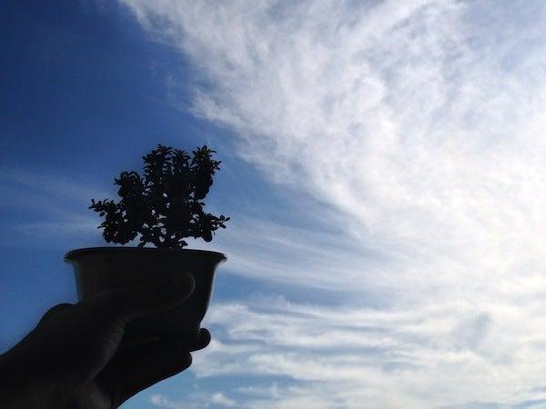 盆栽丼 BONSAI★DON 特盛り入りました~♪-ミニ盆栽白紫檀シルエットと手