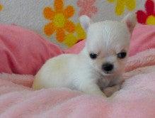 犬猫ママのブログ