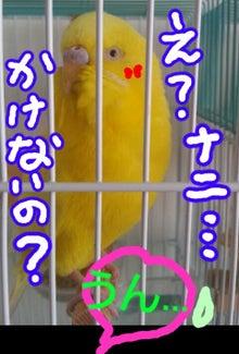 黄色いインコと小心者の飼い主(ブログINできなくなるかも知れないけど、続けたいデス)-1379994508115.jpg