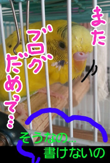 黄色いインコと小心者の飼い主(ブログINできなくなるかも知れないけど、続けたいデス)-1379994011868.jpg