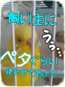 黄色いインコと小心者の飼い主(ブログINできなくなるかも知れないけど、続けたいデス)-7821219.png