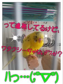 黄色いインコと小心者の飼い主(ブログINできなくなるかも知れないけど、続けたいデス)-148098539.png