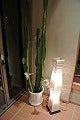 杜建築設計室&杜蘭丸…&藤丸-サボテンの花2