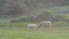 $すすきのBEATの営業雑感 -牛に立ち向かう子羊