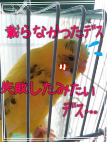 黄色いインコと小心者の飼い主(ブログINできなくなるかも知れないけど、続けたいデス)-100770694.png