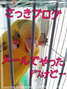 黄色いインコと小心者の飼い主(ブログINできなくなるかも知れないけど、続けたいデス)-100561231.png