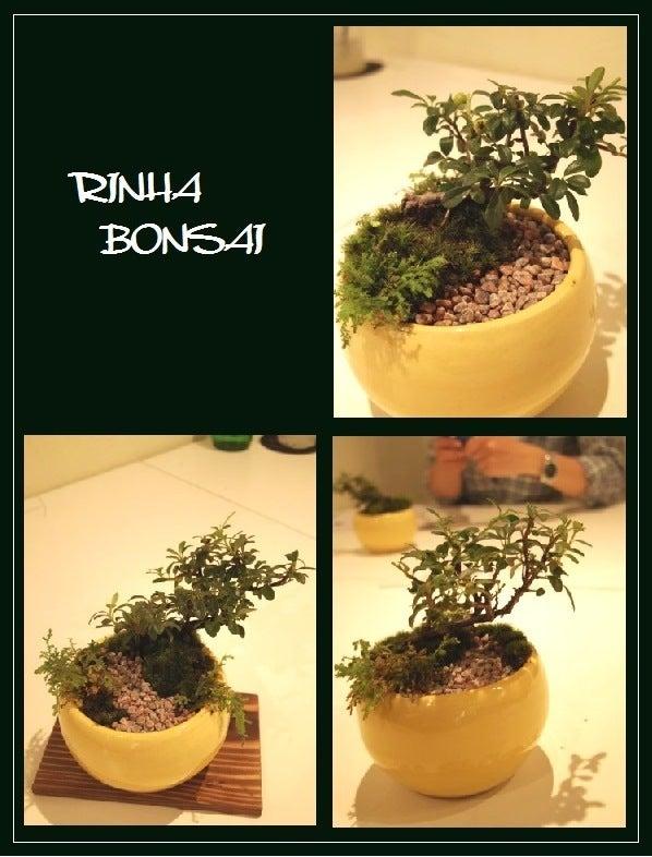 bonsai life      -盆栽のある暮らし- 東京の盆栽教室 琳葉(りんは)盆栽 RINHA BONSAI-琳葉盆栽 ベニシタン