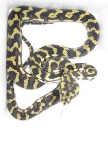 $蛟家ブログ 蛇の道は蛇