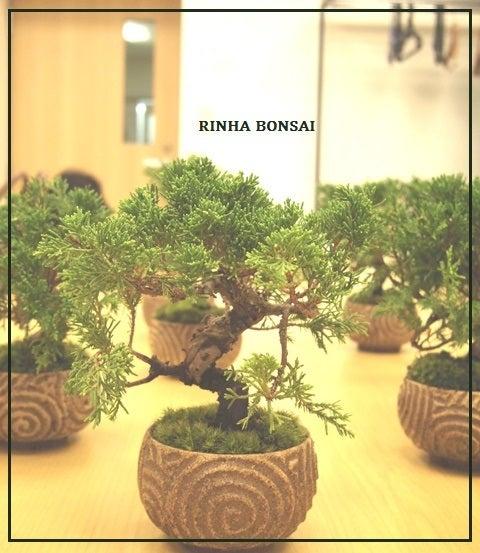 bonsai life      -盆栽のある暮らし- 東京の盆栽教室 琳葉(りんは)盆栽 RINHA BONSAI-琳葉盆栽 真柏 オリジナル盆栽鉢